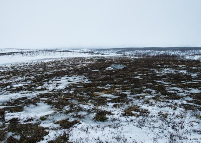 Stora Sjöfallet national park. Mid winter 2014.
