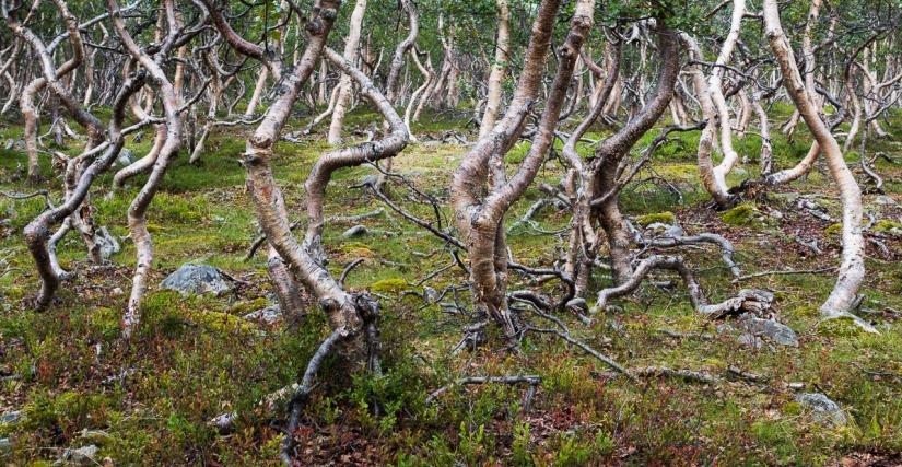 Metsähallituslaki – maansiirtoYlä-Lapissa